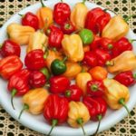 habanero chili pepper