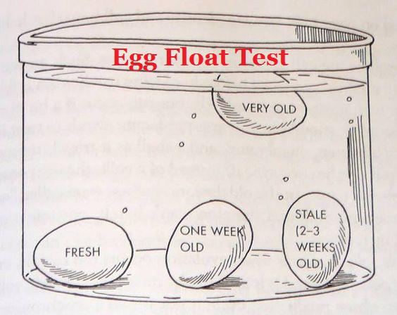 Egg float test