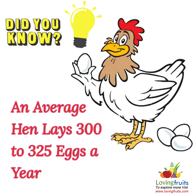 How long are eggs good after the expiration date in Perth