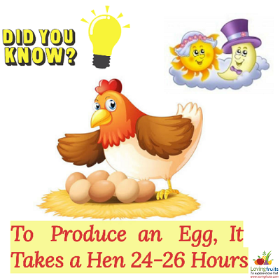 How much eggs hen lay in a day